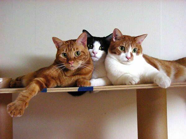 Коты картинки смешные с анигдотами