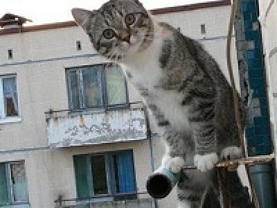Невозмутимый кот, или на воре и шапка горит