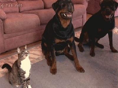 Гиф-картинка Он думает, что он тоже собака