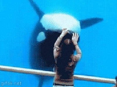 Гиф-картинка Дельфин - как ребёнок