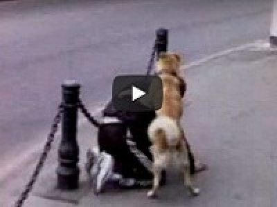 АХТУНГ!!! Что вытворяет пес с пьяным на улице!!!