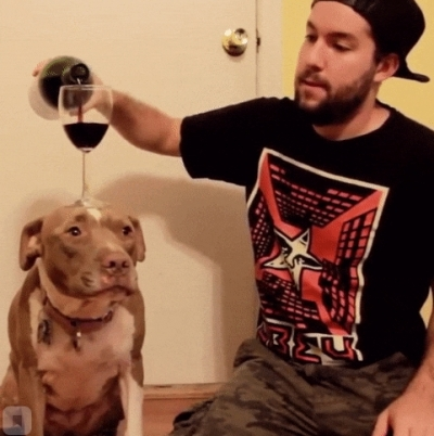 Гиф-картинка Умная собака
