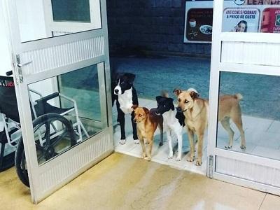 Подборка видео и фото с домашними животными. Эмоции, анекдоты