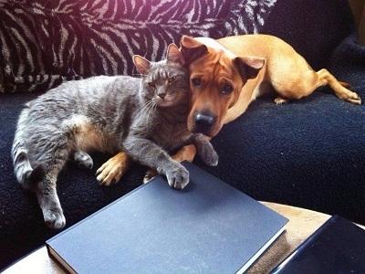 Дружба разных животных (Фото и анекдоты)