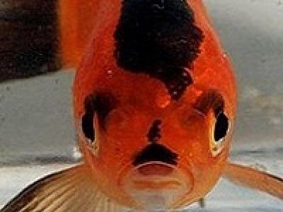 Найдена рыба-гитлер