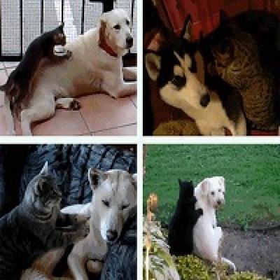 Кошачьи массажи