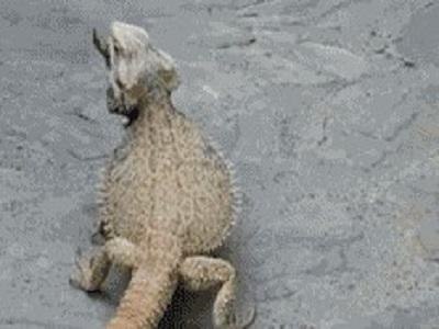 Гиф-картинка Динозаврик