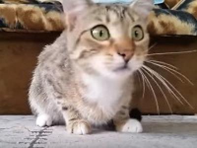 Кот смотрит фильм ужасов. Анекдоты про Штирлица