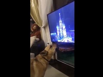 Реакция собаки на гимн России